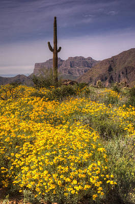 The Superstitions Photograph - Desert Wildflowers  by Saija  Lehtonen