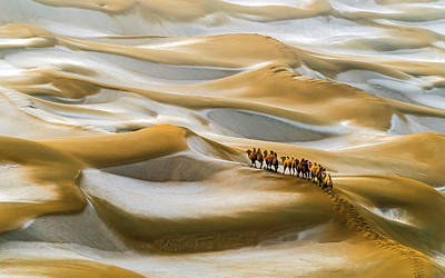 Camel Photograph - Desert Winter by Hua Zhu