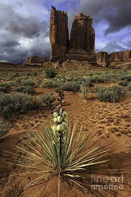 Photograph - Desertscape by Stuart Gordon