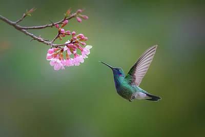Hummingbird Photograph - Desire by Adhemar Duro