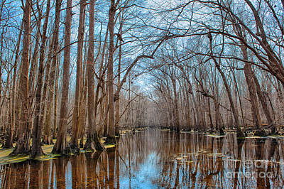 Desolate Paradise - A Swamp In North Carolina Print by Dan Carmichael