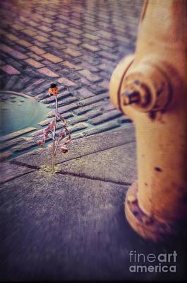 Burned Clay Photograph - Desperate For Water by Danilo Piccioni