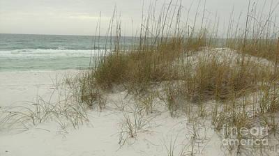 Photograph - Dest Fla Beach Dunes by Craig Calabrese