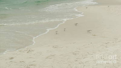Photograph - Destin Fla Sea Birds by Craig Calabrese
