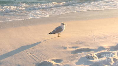 Photograph - Destin Fla Seagull by Craig Calabrese