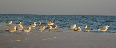 Tool Paintings - Destin Seagulls by Wil Clark