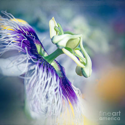 Passiflora Photograph - Destination Sunshine by Sharon Mau