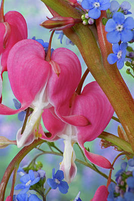 Bleeding Hearts Photograph - Detail Of Bleeding Hearts And Brunnera by Jaynes Gallery