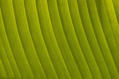 Simple Beauty In Colors Photograph - Detail Of Leaf Marrakech, Morocco by Ian Cumming