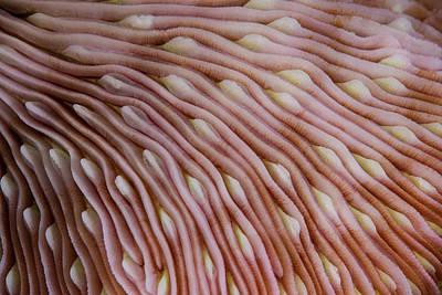 Detail Of The Texture On A Mushroom Art Print