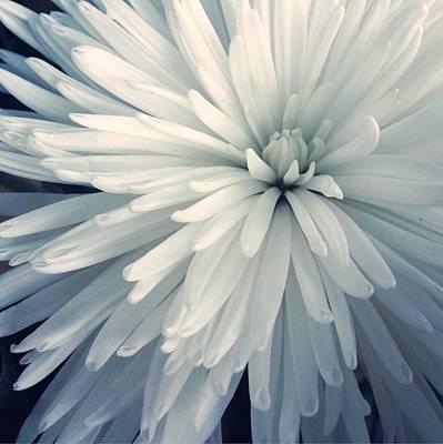 Detail Shot Of Cropped White Flower Art Print by Valerie Locante / Eyeem