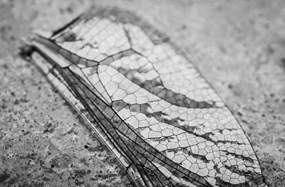 Dragon Fly Digital Art - Detailed Dragon Fly's Wing by Susan Stone