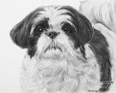 Shih Tzu Drawing - Detailed Shih Tzu Portrait by Kate Sumners