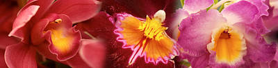 Stamen Photograph - Details Of Red And Violet Orchid Flowers by Panoramic Images