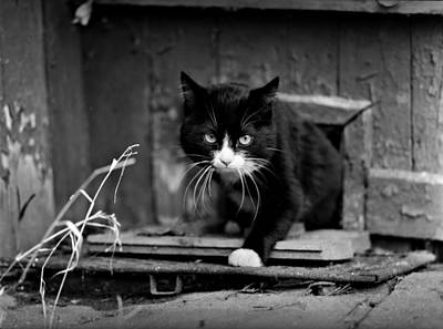 Grimm Fairy Tales Royalty Free Images - Determined Cat Royalty-Free Image by Evgeny Govorov