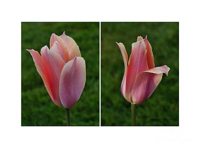 Photograph - Deux Belles Tulipes by Patricia Strand