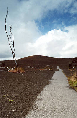 Art Print featuring the photograph Devastation Trail by Mary Bedy