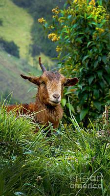 Patchwork Quilts Photograph - Devil Goat On El Altar by Al Bourassa