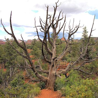 Photograph - Devil Tree Of Grand Canyon - Square by Gordon Elwell
