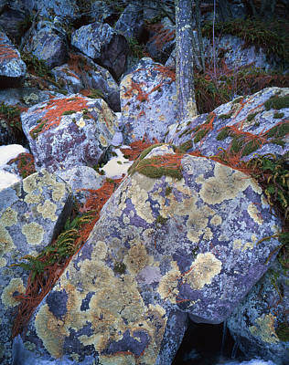 Photograph - Devil's Lake Boulders by Ray Mathis