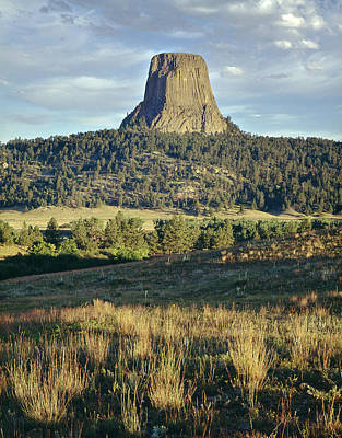 Butterflies Rights Managed Images - 1M9806-Devils Tower 1 Royalty-Free Image by Ed  Cooper Photography