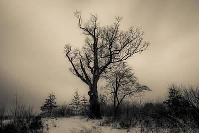Devil's Tree Landscape Art Print by Jeffrey Miklush