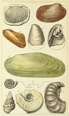 Devonian Fossils, Illustration Art Print