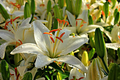 Photograph - Dew Day Daylily Flower Art by Reid Callaway