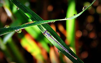 Photograph - Dew Dew by Reid Callaway