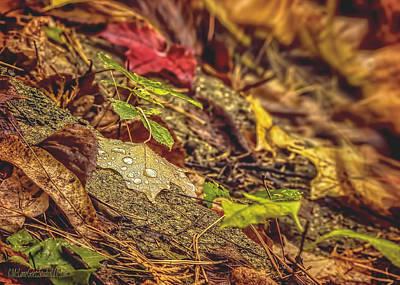 Foliage Photograph - Dew Drop In by LeeAnn McLaneGoetz McLaneGoetzStudioLLCcom
