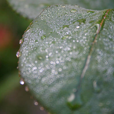 Photograph - Morning Dew 2 by Bamalam  Photography