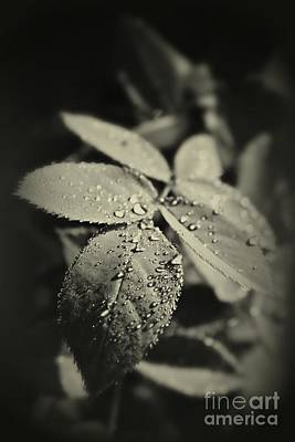 In The Spotlight Photograph - Dew Drops by Clare Bevan