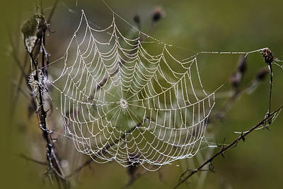 Photograph - Dew Drops Spider Web by Christina Rollo