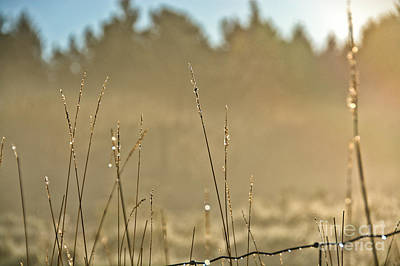 Photograph - Dew Fog And Grasses by Cheryl Baxter