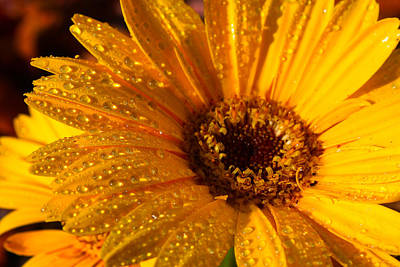 Print featuring the photograph Dew On A Daisy by Richard Stephen
