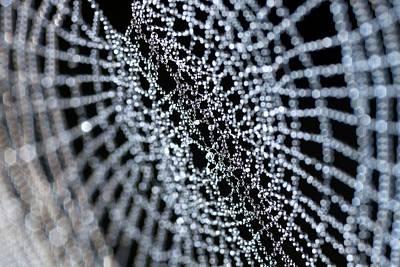 Dew On A Spider's Web Print by Olivier Vandeginste