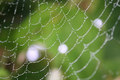 Photograph - Dew On A Web  by Trent Mallett
