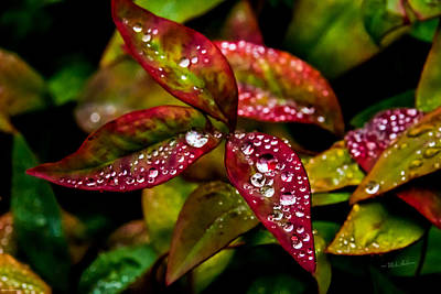 Photograph - Dew On Autumn Leaves by Mick Anderson