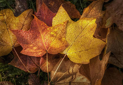 Water Drops Photograph - Dew On Autumn Leaves by Scott Norris