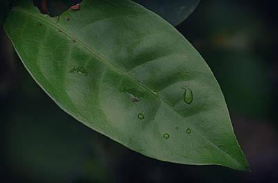 Dew On Leaves Art Print by David Longstreath