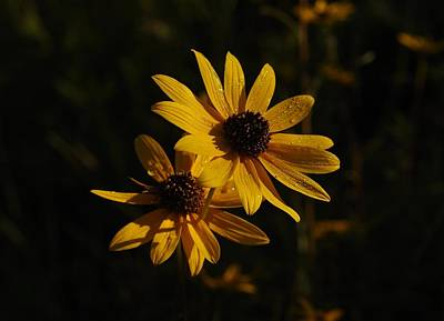 Photograph - Dew On Sunflowers by Billy  Griffis Jr