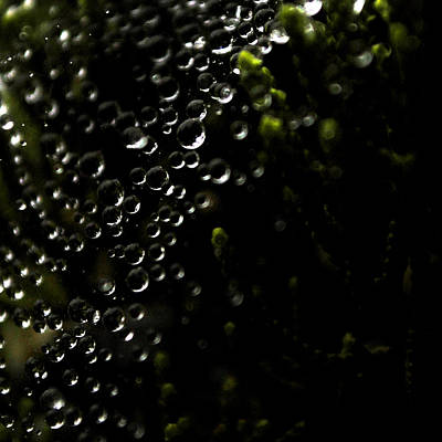 Photograph - Dew by Randal Bruck