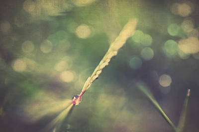 Alone Photograph - Dew by Taylan Apukovska