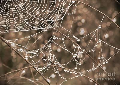 Dewdrop Web In Sepia Art Print by Carol Groenen