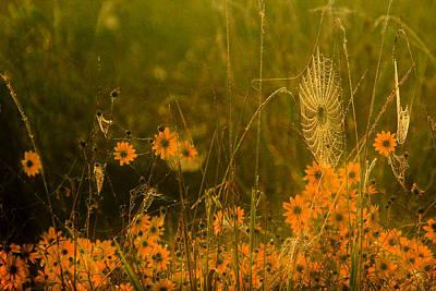 Photograph - Dewey Golden Morning by Robert Camp