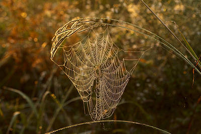Photograph - Dewey Spider Web by Robert Camp