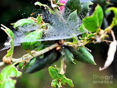 Photograph - Dewey Web by Third Eye Perspectives Photographic Fine Art