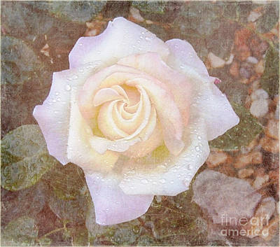 State Love Nancy Ingersoll - Dewy Dawn Peace Rose by Alys Caviness-Gober