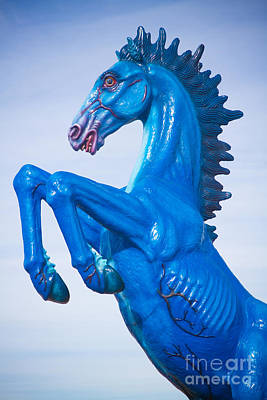 Photograph - Dia Blue Mustang Portrait 2 by James BO  Insogna