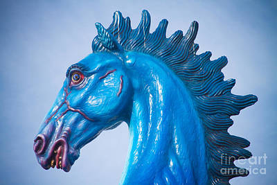 Photograph - Dia Blue Mustang Portrait by James BO  Insogna